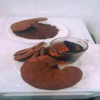 Nấm Linh Chi Đỏ nguyên tai viện Di Truyền Nông Nghiệp nuôi trồng