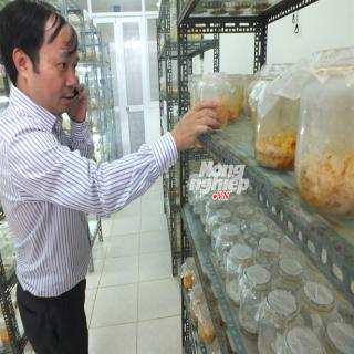 """Đông trùng hạ thảo """"Made in Viet Nam"""": Chất lượng tới đâu?"""